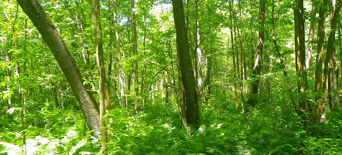Northern Wet-Mesic Hardwood Forest