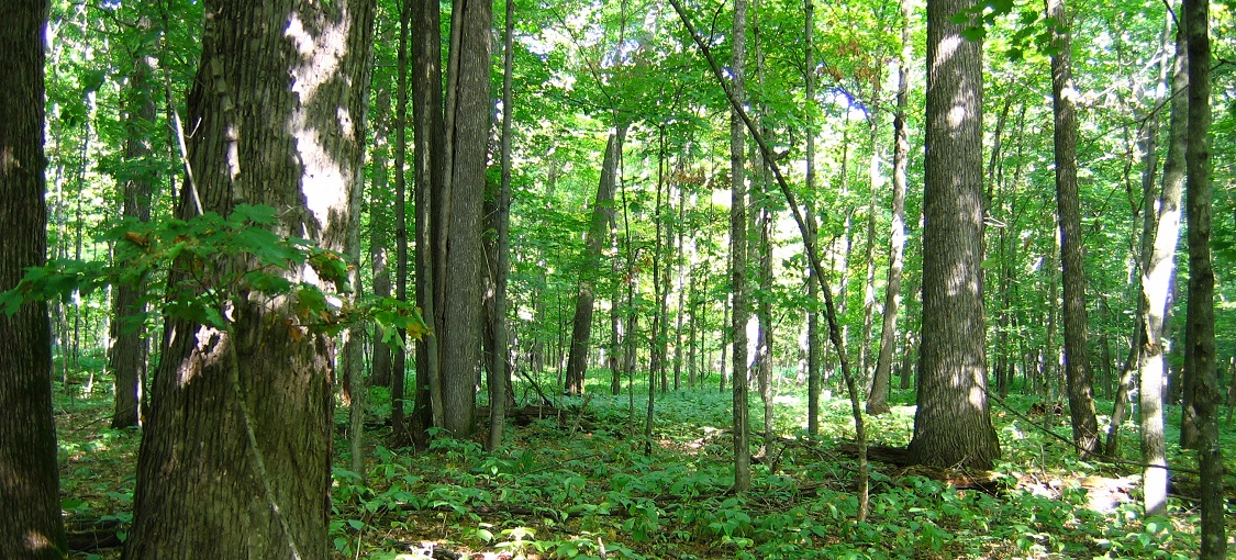 Southern Mesic Maple-Basswood Forest